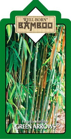 Fargesia murielae Green Arrows
