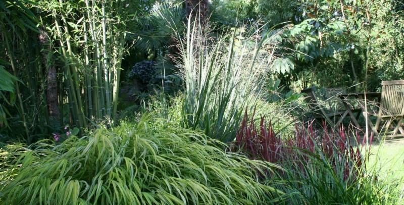 Bambus Kaufen Direkt Aus Der Familienbaumschule Greenone De